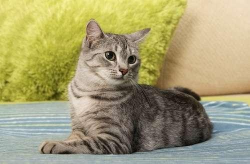 5ヶ月目猫ちゃんの 平均体重や餌について