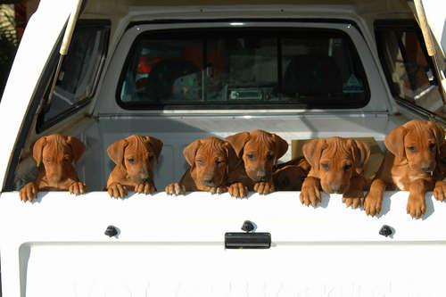 山梨県で犬の里親を募集しているサイトをご紹介します!