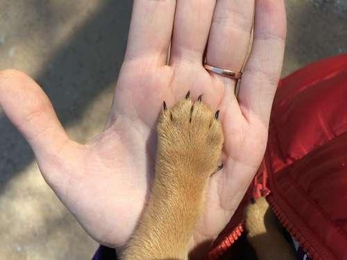 犬を飼うなら里親になりませんか? 山口県犬里親募集情報の紹介