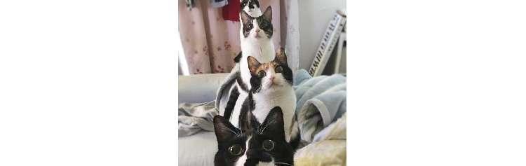 【ネコザイル?!】ご主人を元気付けるため、ネコたちのとった行動が… すごすぎたっ♡ 4枚