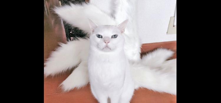 【九尾のニャンコ】コスプレ用衣装の前に猫が座った → あまりに神々しすぎる姿が、話題に! (5枚)