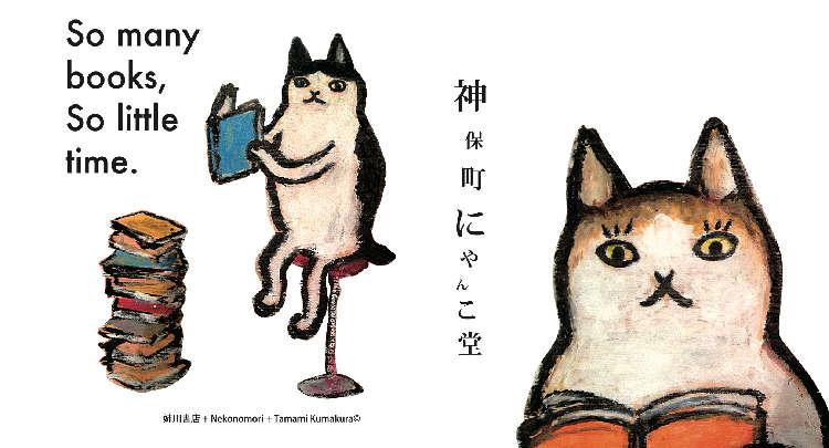 日本初の猫本専門店!詳しく知りたい「にゃんこ堂」とは