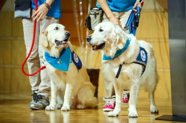 医療現場に癒やしを与える犬たち。日本で二頭だけの「ファシリティドッグ」