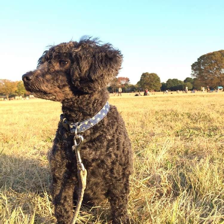 里親になった日【ぼくの人生を変えた保護犬「ウディ」のこと #3】