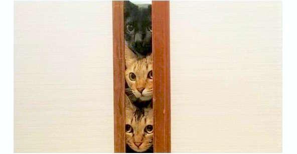 掃除機が怖いけど、気になるネコ達♪ みんなで覗く姿が…カワイイけど笑っちゃう♡(7枚)