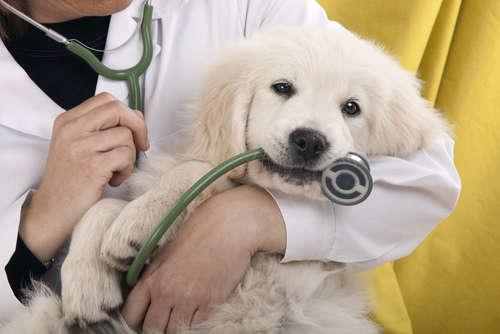 """『ペットの体調を、スマホで獣医師に相談できる』新しいペット医療 """"PET'S ALL RIGHT"""""""