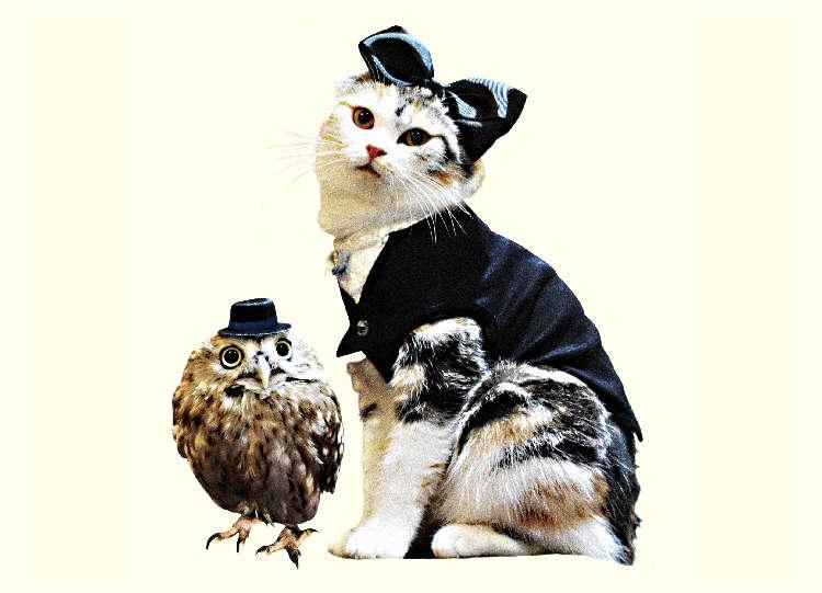 猫が歌う『ニャンクラ』ついにCDリリース!あなたの猫ちゃんがムービーに登場してるかも♪