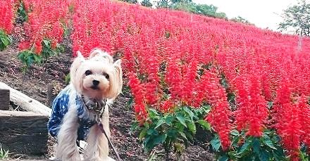 """『秋のお花が咲き誇る!』秋の休日は、自然豊かな """"マザー牧場"""" で愛犬と一緒に癒されよう♪"""