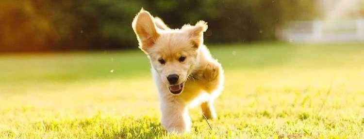 3本脚で生まれた1匹の子犬。彼は、どんなワンコよりもパワフルに生きている!(13枚)