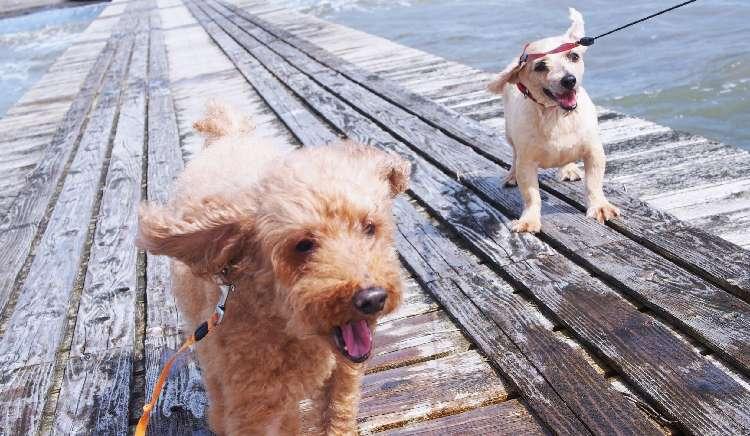 """『犬連れ旅行♪』愛犬との旅も思う存分楽しめる! """"貸し別荘"""" で、2日間の癒しのひととき"""