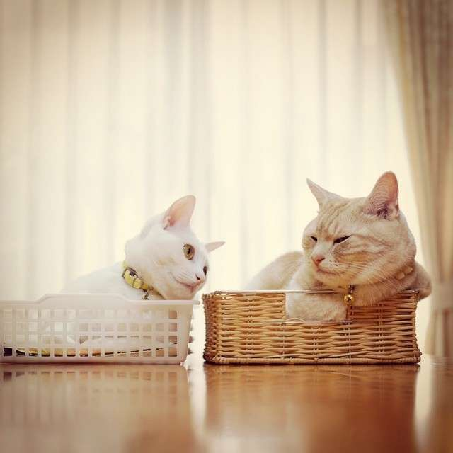 """大切にしているのは""""食生活""""―― 人気インスタグラマー上田まり子さんが語る、愛猫との生活について"""
