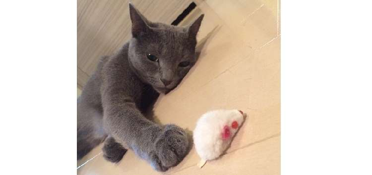 "【PECOBOX for Cats】人気のPECOBOXから、遂に ""ネコちゃん用""が大登場!"
