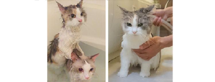 【お利口すぎる♡】飼い主さんを気遣って、大人しくお風呂に入る2匹のネコが話題に…(´;ω;`)♡