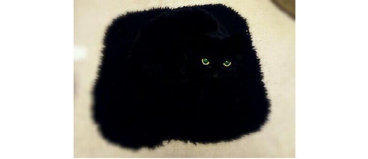 【座布団から視線…】座布団の上の、黒猫を撮影した → 同化しすぎな画像に騒然…( ゚д゚)!! 5枚
