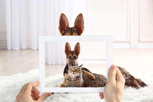 Web CMに出演できるチャンス♪ 食べる愛犬・遊ぶ愛猫の動画を投稿しよう!