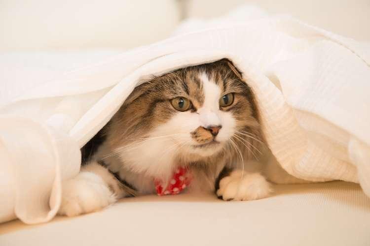 室内での暮らしは猫ちゃんにストレスになることも。心の健康にも配慮した食事とは?
