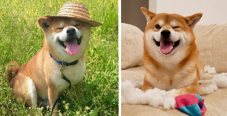 【幸せが溢れてるッ!】表情たっぷりな柴犬べりやんの日常に、癒やされまくりな写真集♡(24枚)