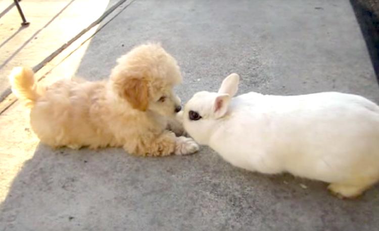 会って数秒で仲良しに…♡ 初めて顔を合わせた子犬とウサギ、天真爛漫な2匹の相性はバツグン♪