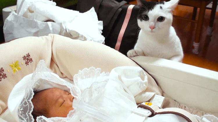 新しい家族に愛猫はどう反応するの?→ちょっと緊張したけど優しい目で迎えてくれた(*´ェ`*)