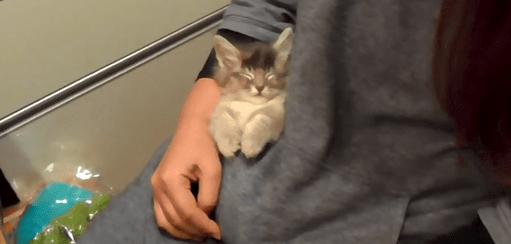 飼い主さんの腕に抱かれ、ポケットに入って熟睡中の子猫さん。そりゃもう最高の寝顔になります♡