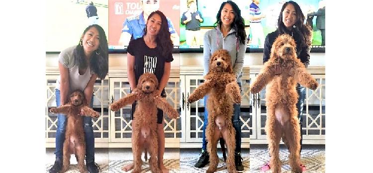 【半年でこんなに…!】愛犬の成長を記録した、飼い主さんとの写真。その変化にビックリ(^m^)♡