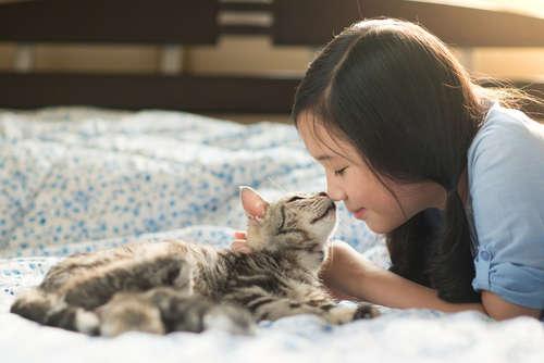 【埼玉限定】猫の里親になる方法と注意点