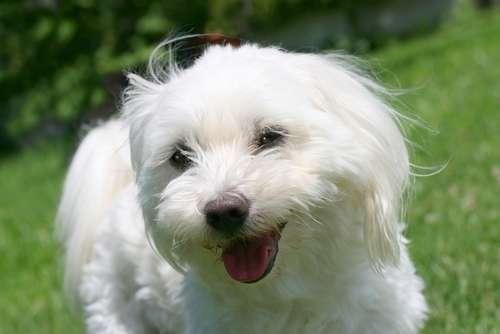 【大阪限定】 里親募集中の犬との出会い方
