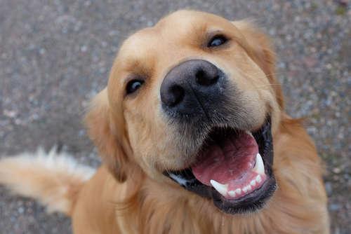 【犬の虫歯】あなたの愛犬は大丈夫? ~治療法・予防法~