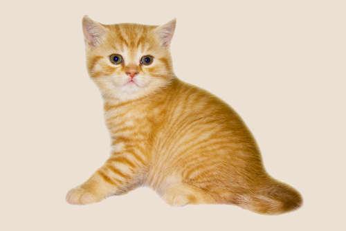 どれくらいの体重が適正? 9ヶ月の猫の体重について