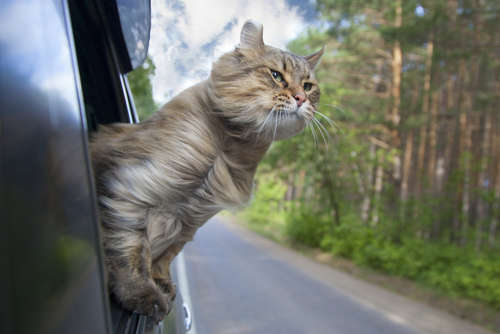 【にゃらん】じゃらんのCM旅する猫が可愛い!