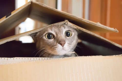 快適に過ごせる?東京の猫ちゃん専門のペットホテル