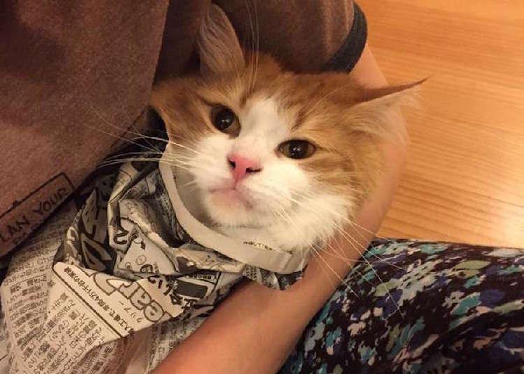 新聞を邪魔する猫ちゃんへの、対策が可愛すぎた...♡ (画像2枚)