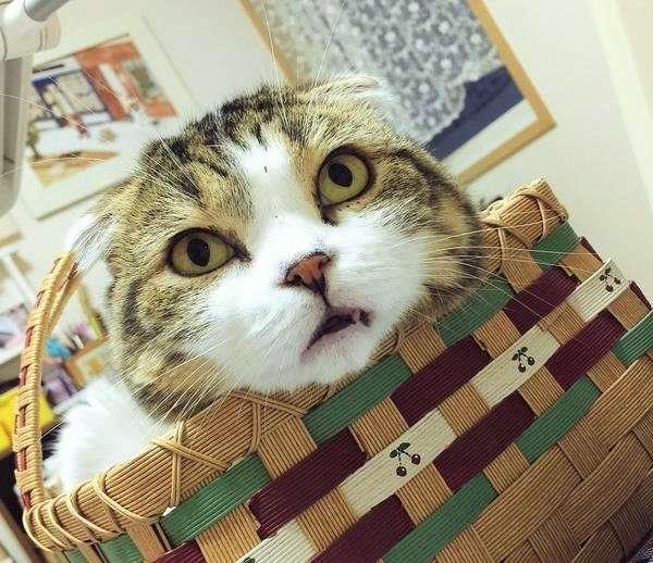 【コロコロ 変わる表情♪】ニャンコの面白い表情から目が離せないっ!!(>。∂)♥︎ 画像4枚