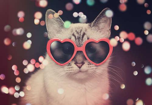 「にゃんフェス かごんま」が2月に開催 鹿児島の猫好き集まれ!