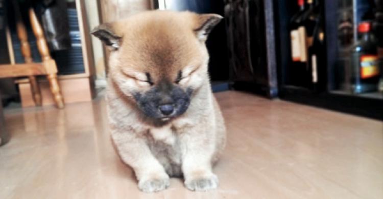 ウトウト…こてんっ♪ 子柴さん、この後眠さに負けて力尽きちゃいます♡ (17秒)