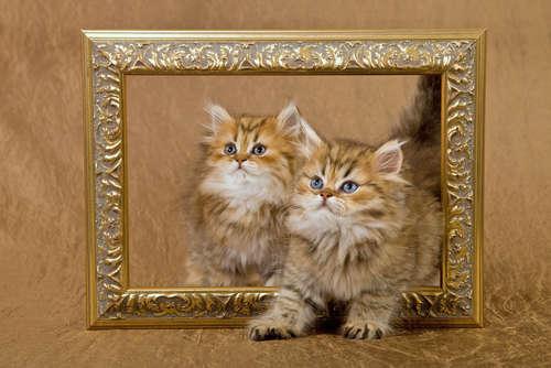 まさに猫まみれ! 猫作品のみを集めた展覧会が開催されます