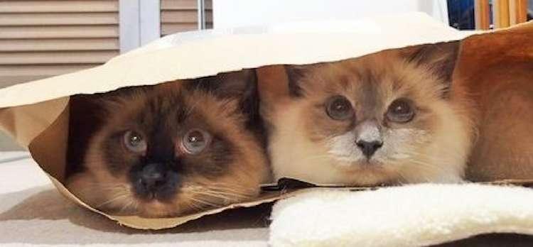 """【秘密の時間♫】袋に潜んだネコたちの """"イチャイチャっぷり"""" が、羨ましい(∩˃o˂∩)♡ 4枚"""