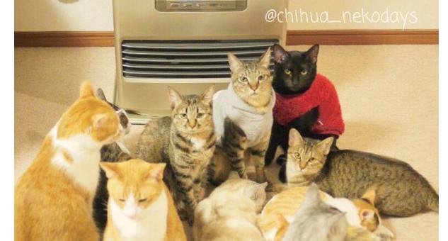 【ストーブ前に集合♪】猫ちゃんが考えることは、皆同じ…にしてもこの光景は、スゴイ! (画像2枚)