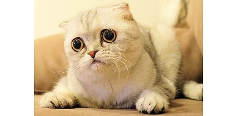 """【泣かないで】究極の """"困り顔"""" のネコちゃん。思わず励ましたくなる、可愛さが話題に…♡(10枚)"""