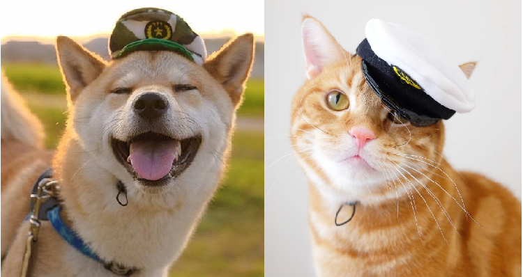 【かわいいお巡りさん♡】ワンコ用の警官帽子を被った動物さんたち。逮捕されたいと話題に…♡ (14枚)