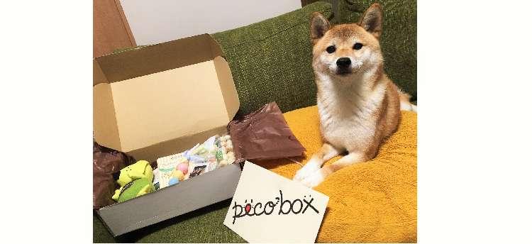 《PECOBOX》10月号のテーマは運動会♪ 愛犬と一緒にいい汗かこうぜ☆ そして、11月号は…