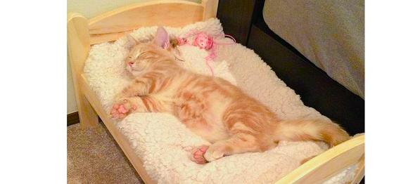 子猫にIKEAの人形用ベッドを買ってあげた結果… → その使いこなしようが、期待以上すぎた!(2枚)