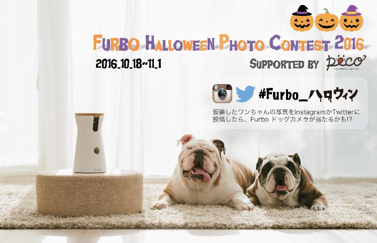 PECOも審査員として参加♪ 「Furbo ハロウィン仮装コンテスト」開催中!