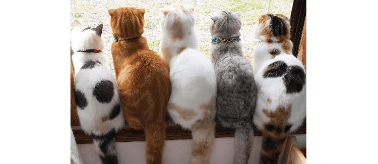 みんなで窓際に大集合! ズラッと並んで外を眺めるニャンコの『まんまる背中』にキュン(*´艸`*)♡