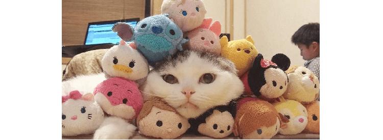 【ぼくはツムにゃ】ツムツムと完全に同化したネコの兄妹。その可愛さが新感覚だと話題に…!