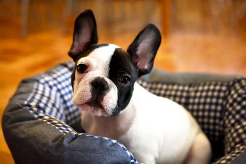 優しい犬と暮らしたい人へ。優しい性格の犬種はこの子たちだ。