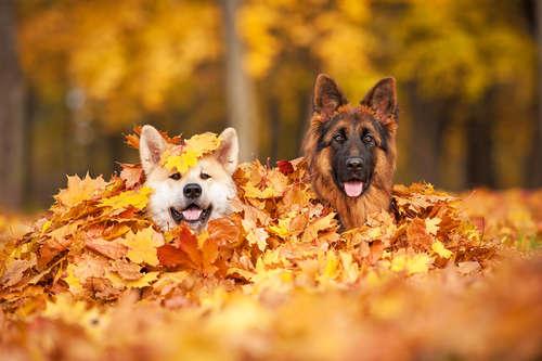 ≪PECOBOX9月号・販売締め切り迫る!≫秋の催し物を、楽しみまくるぞ~っ♡