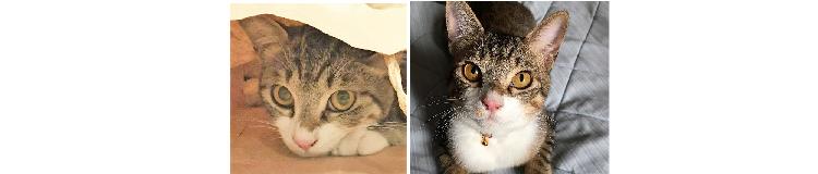 """【あなたはどっち派…?】まんまる太い目""""夜猫""""と、クールな細い目""""昼猫""""を比べてみました♪(15枚)"""