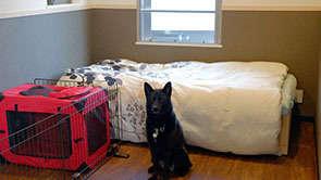 賃貸なのにペット共生型マンション!1人暮らしでも愛犬と暮らせる「シェンノワール」