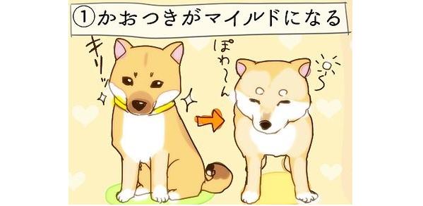 『うちの犬が老犬になって可愛かった、7つのこと』を描いたイラストに、胸がホッコリする(9枚)